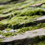 Comment se débarrasser des dépôts verdâtres sur une toiture, un mur ou une terrasse ?