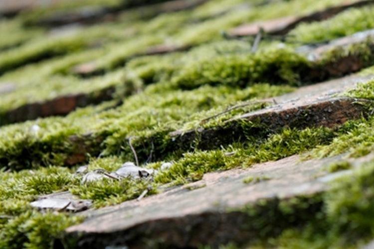 Dépôts verdâtres sur une toiture